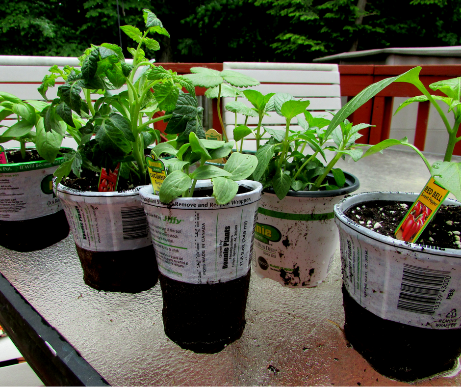 Plants - Screen-free Summer Life Skills Bingo: Grow Your Own Food - Gifted/2e Parenting